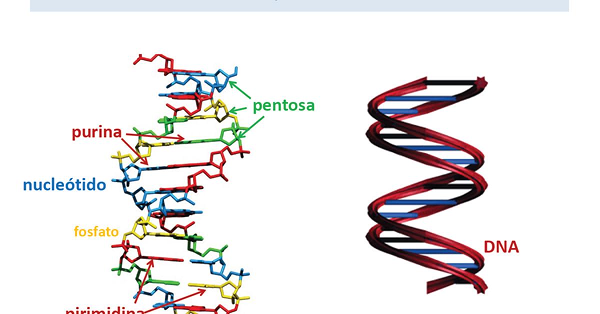 Del Gen A La Proteína Guía Metabólica
