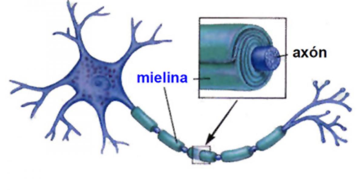 Definicion y funcion mielina