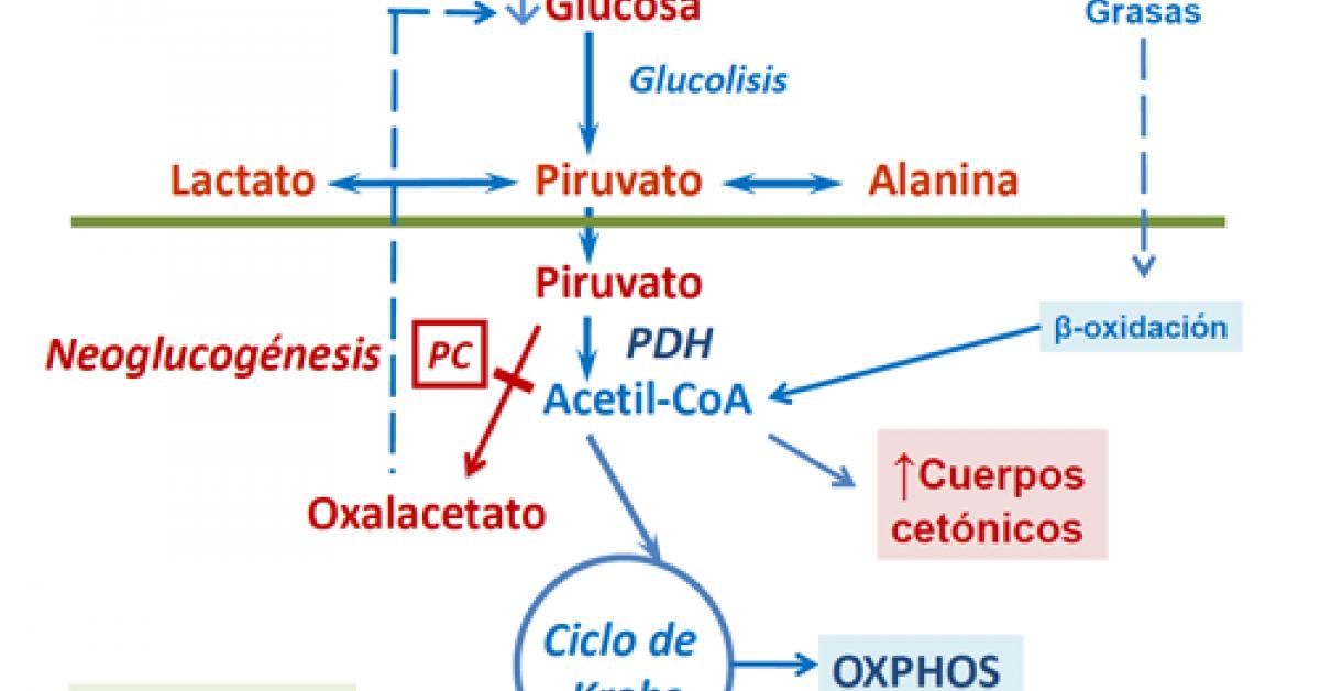 que significa la palabra glucosa wikipedia