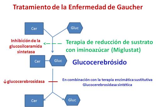 dieta de diabetes glucosilceramida sintasa